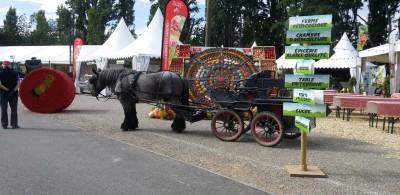eurofair_2020_agricultural_area_horse_fruitsvegetables_eurofora_400