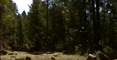 forest_butterflies_eurofora_shot_400