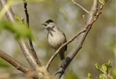spring_2020_bird_patrick_bracker_for_eurofora_400