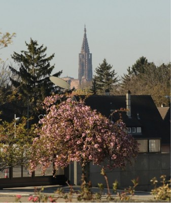 strasb._cathedral_family_homes_spring_flowers_patrick_bracker_for_eurofora_400