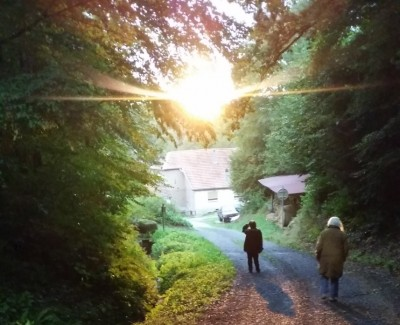 vosges_mountain_forest_sunlight__house_with_humans_eurofora_400